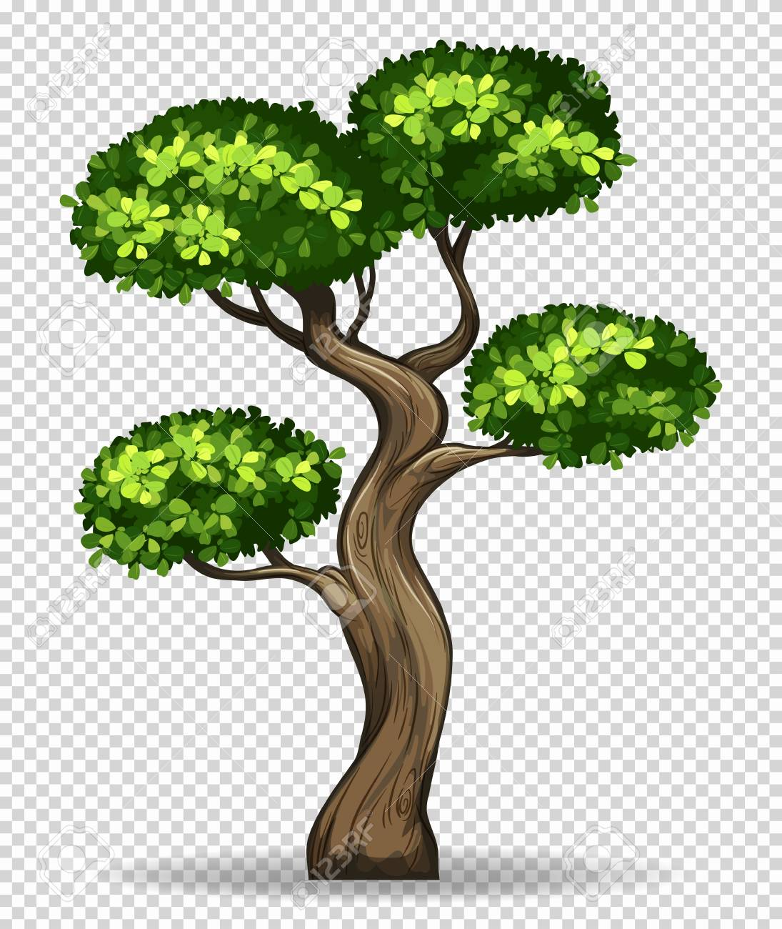 Bonsai tree on transparent background illustration.