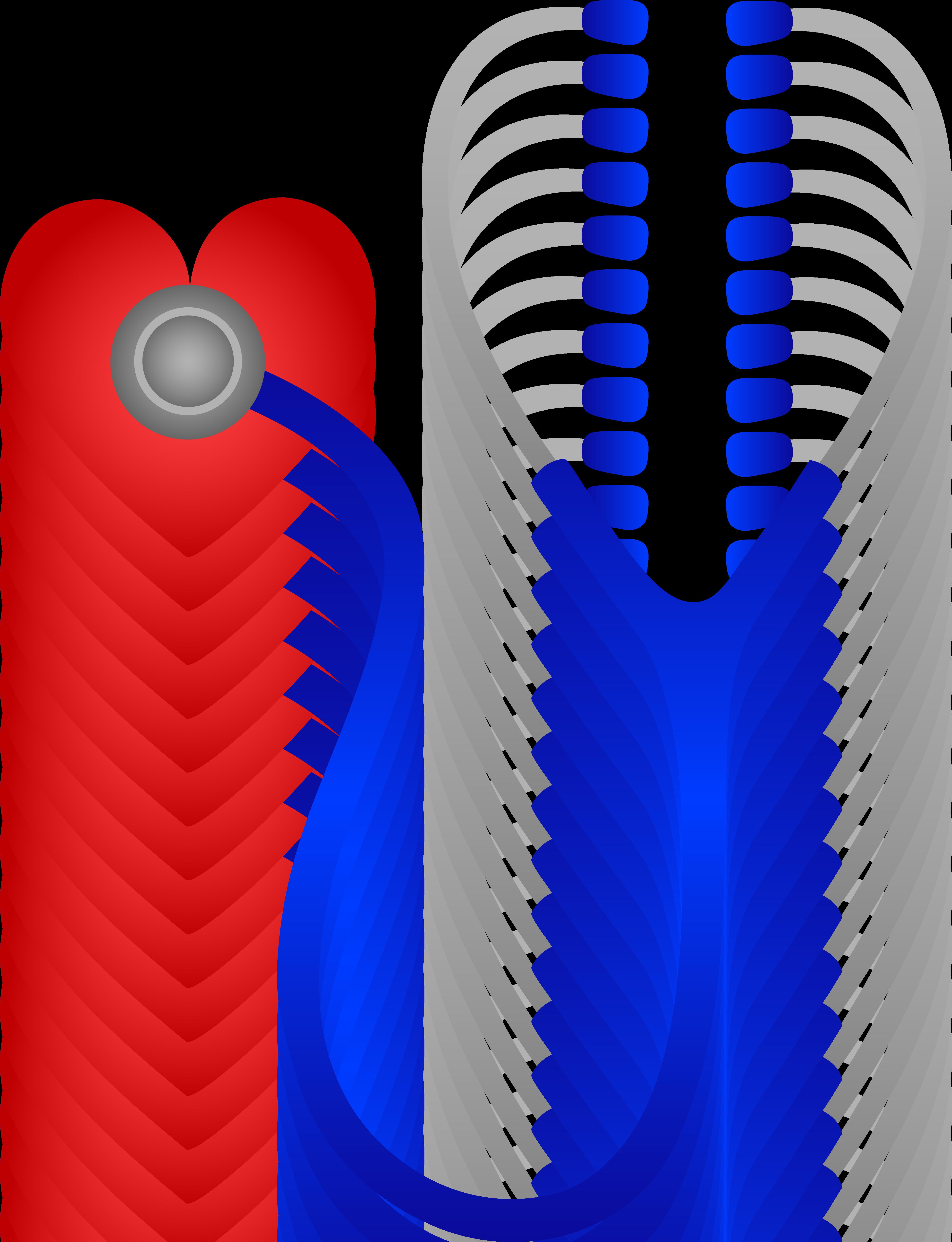 Nursing Stethoscopes #nurse #nurses #nursing #realnurse.