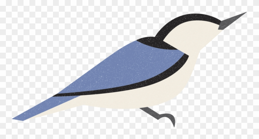 Nuthatch Clipart (#2361751).