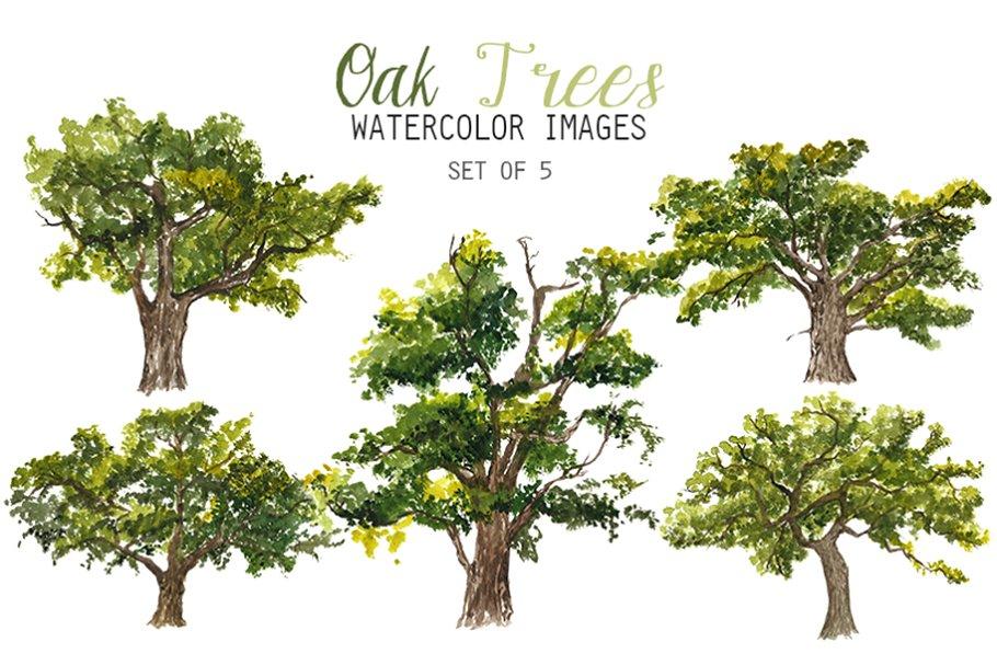 Watercolor Oak Trees Clipart.