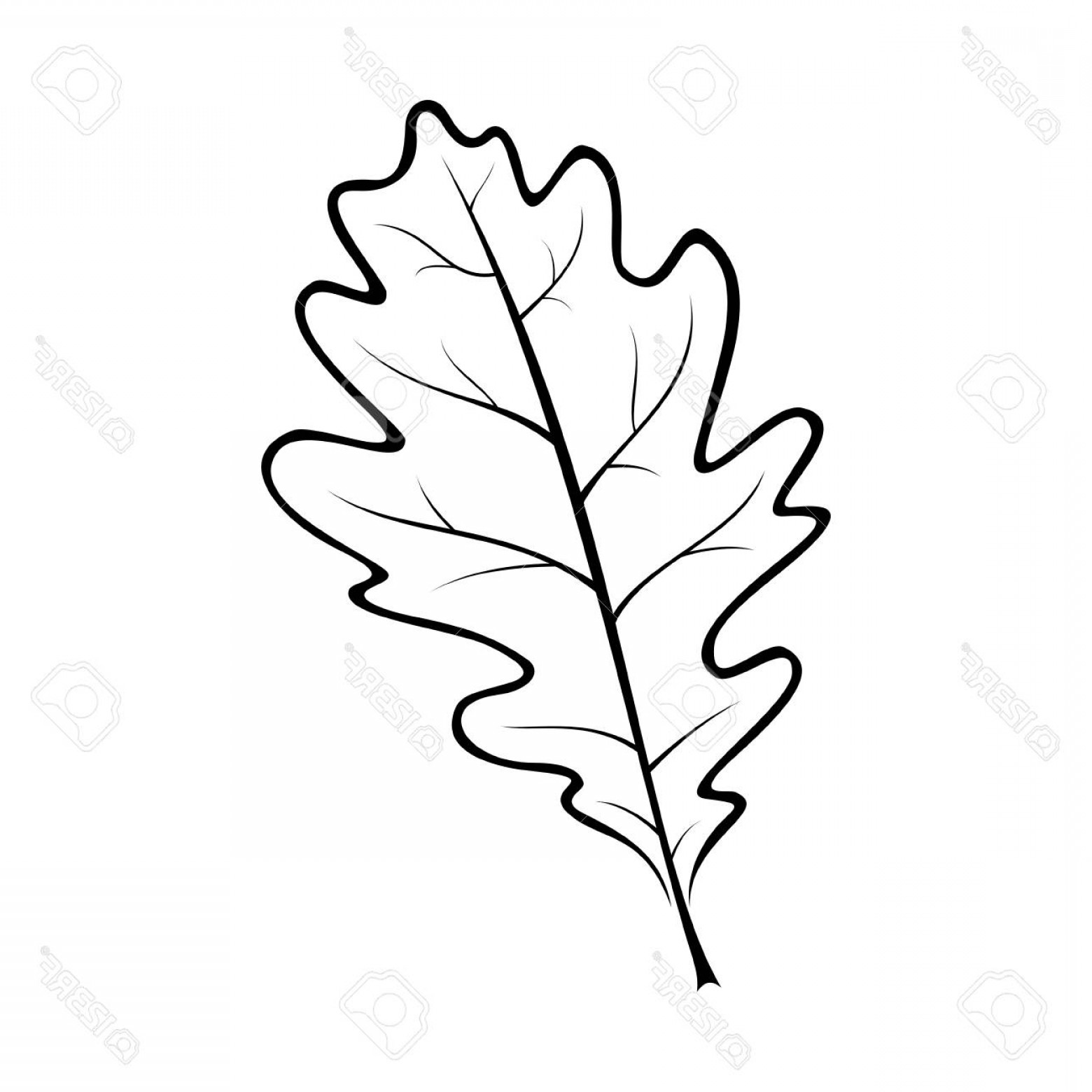 Black And White Vector Oak Leaf Art.