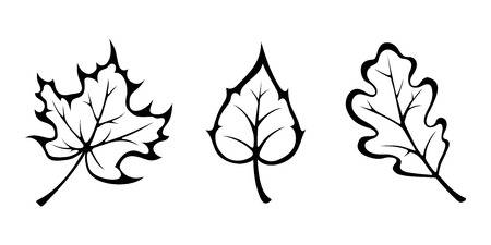 Oak leaves clipart 1 » Clipart Station.