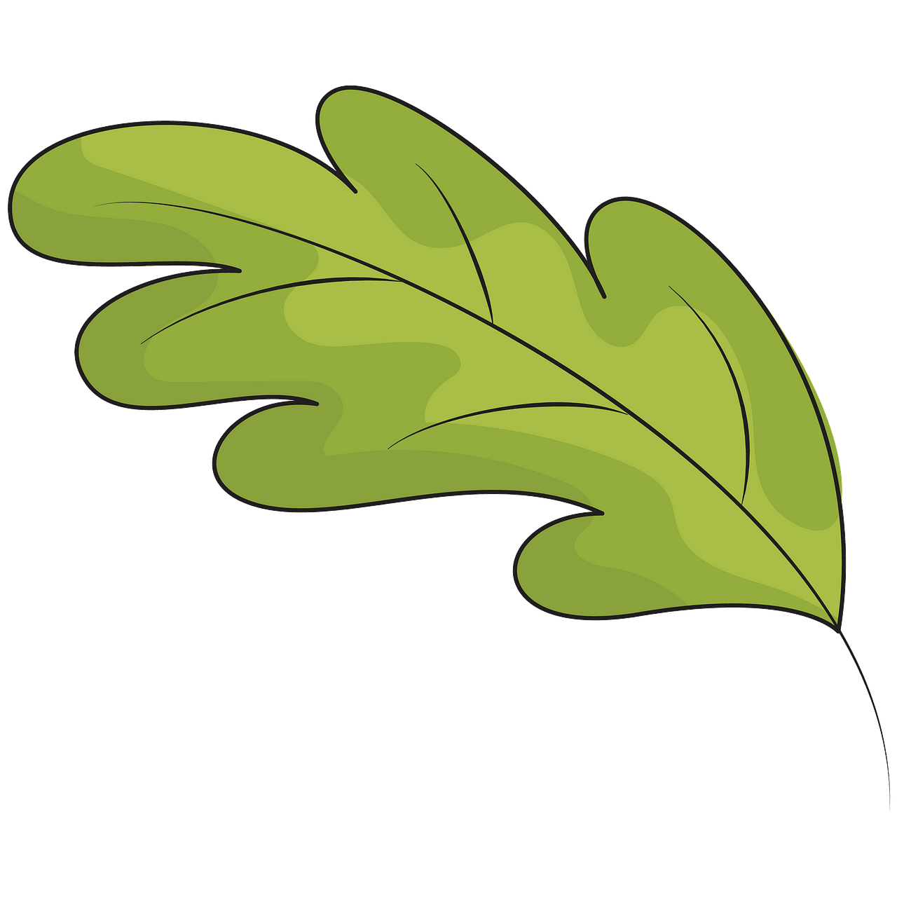 Green oak leaf clipart. Free download..