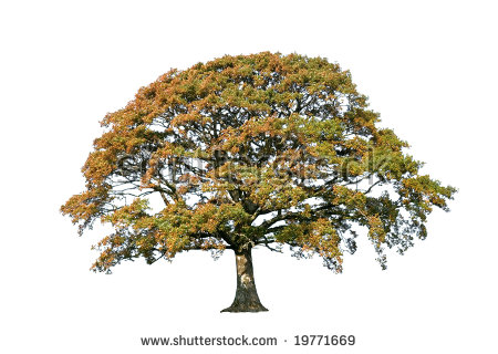 Similiar Autumn Oak Pine Tree Clip Art Keywords.