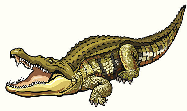 Best Nile Crocodile Illustrations, Royalty.