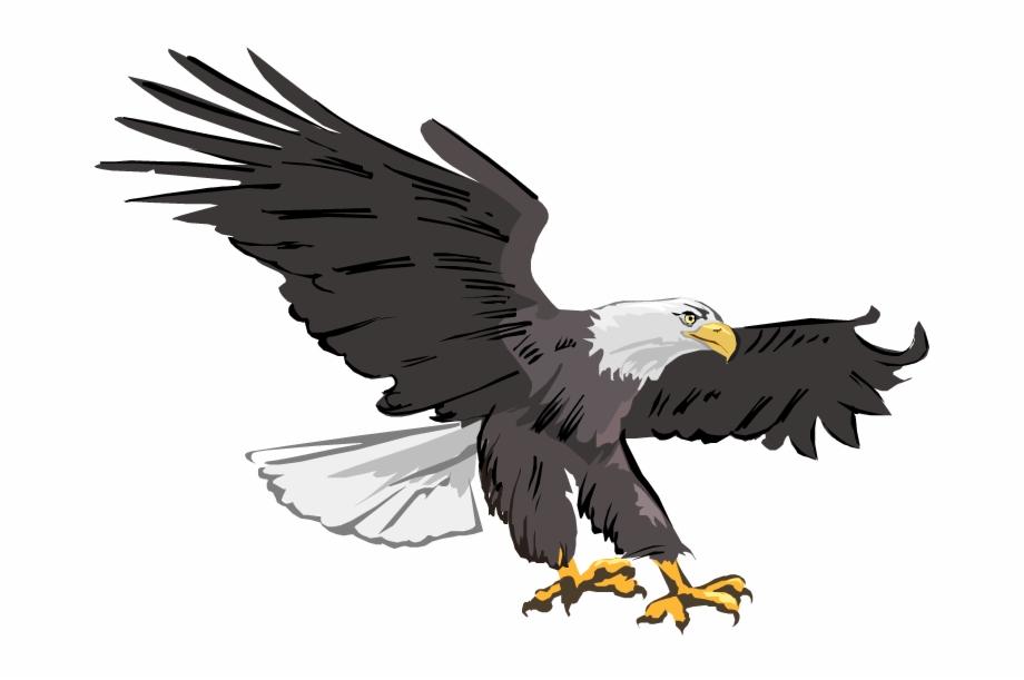 Bald Eagle Images Png Image Clipart.