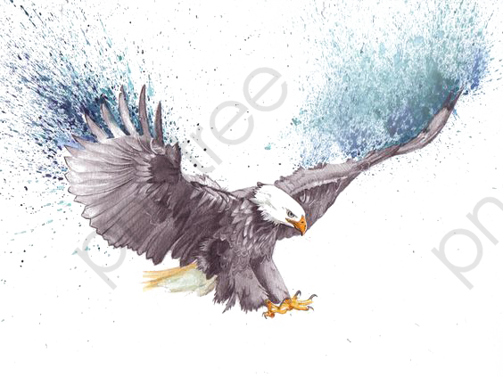 Watercolor Eagle, Watercolor Clipart, Eagle Clipart, Eagle.