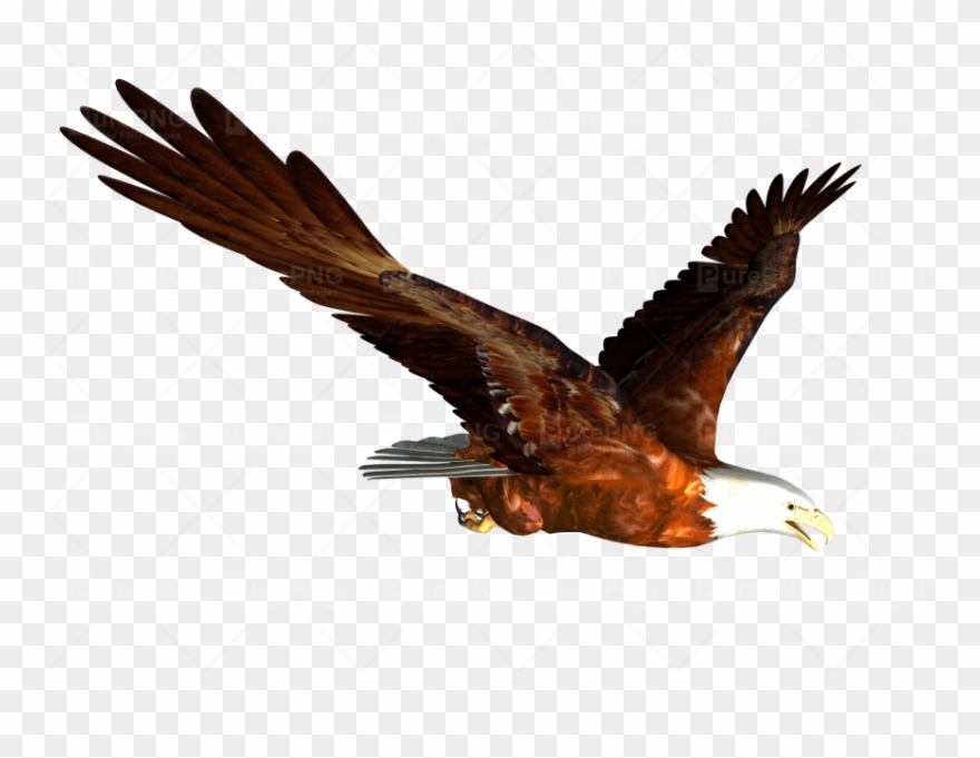 Download Flying Eagle Png Clipart Bald Eagle Clip Art.