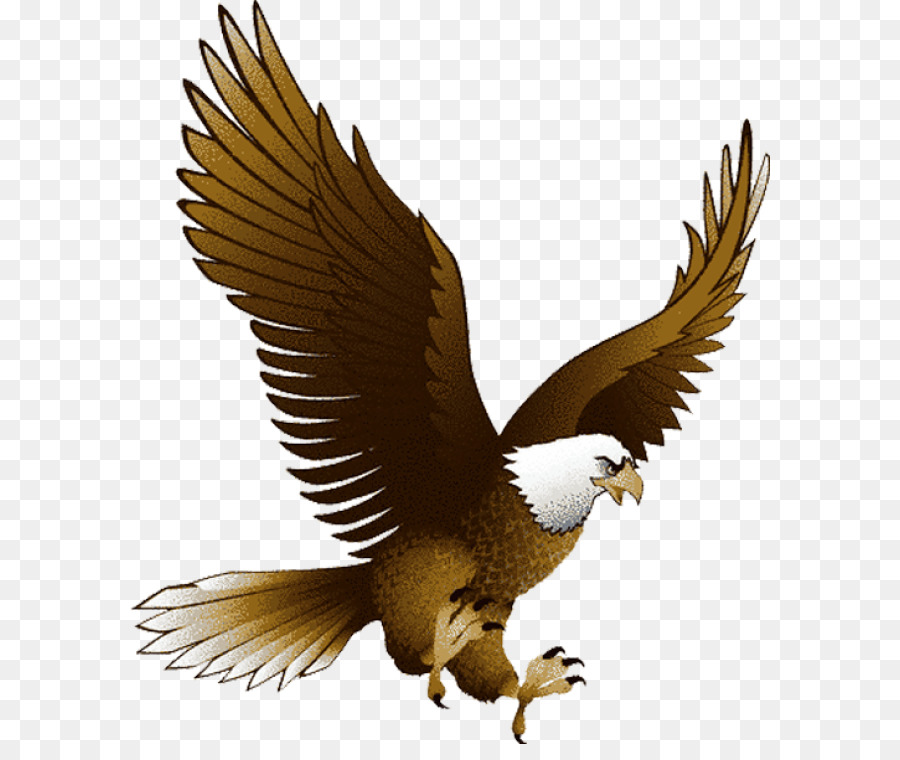 Eagle Bird clipart.