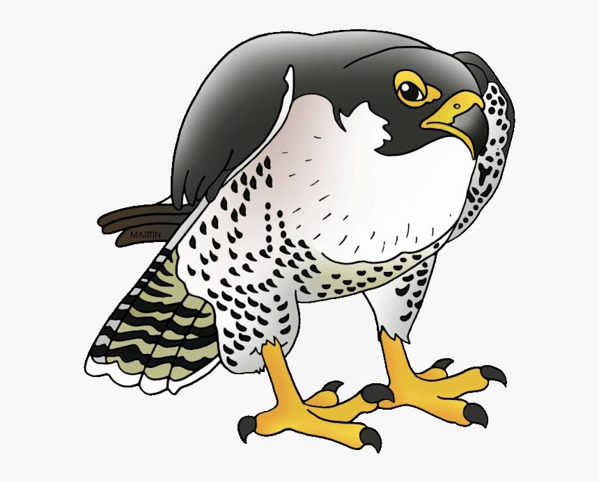 Atlanta Falcons Clipart Falcon Transparent Png.