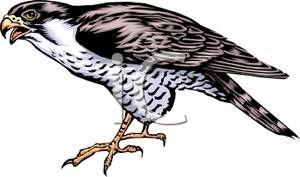 A Colorful Cartoon of a Falcon.