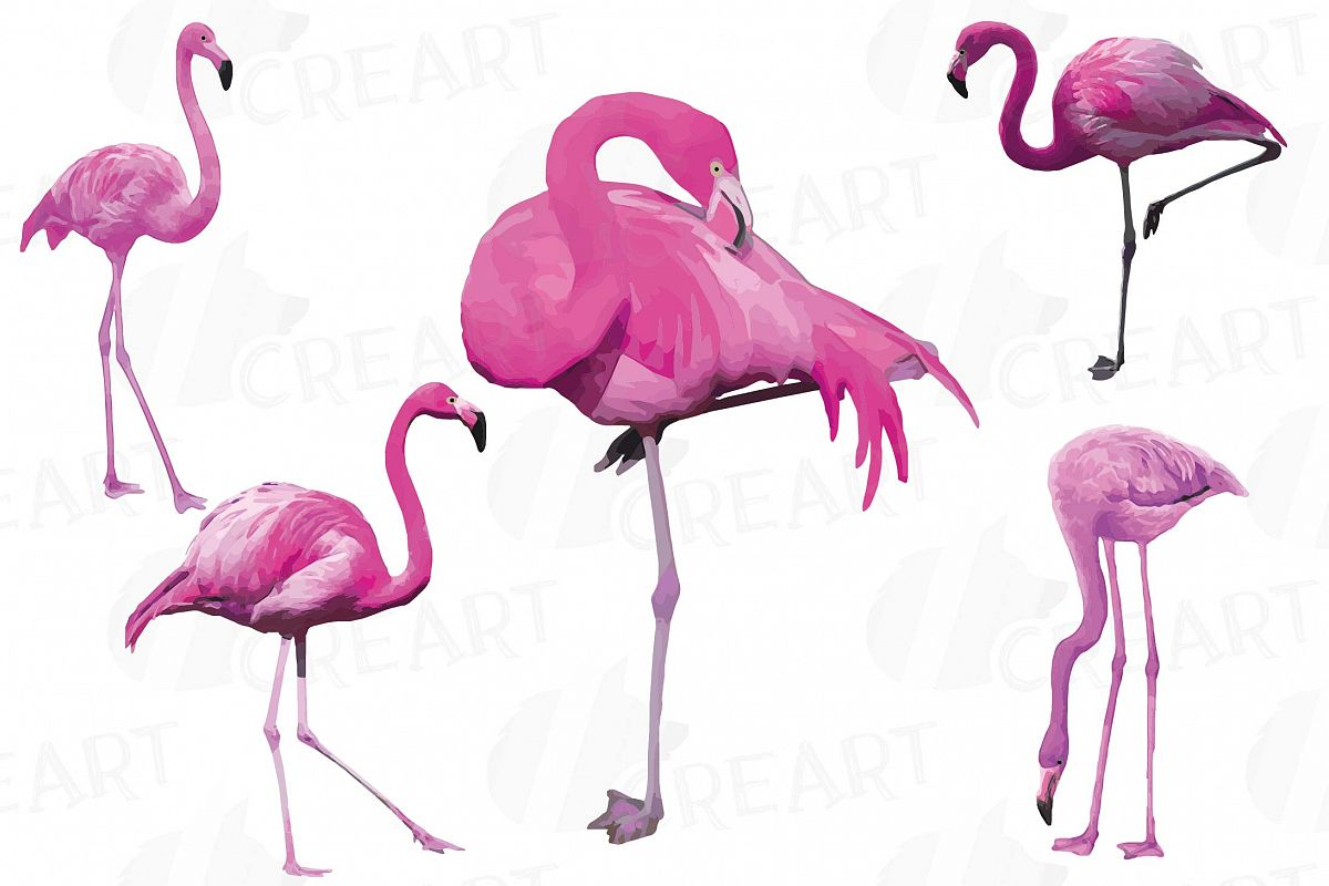 Watercolor Flamingos Clipart. Tropical clipart, 5 flamingo.
