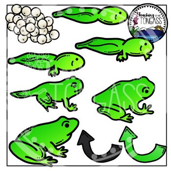 Frog Life Cycle Clipart.