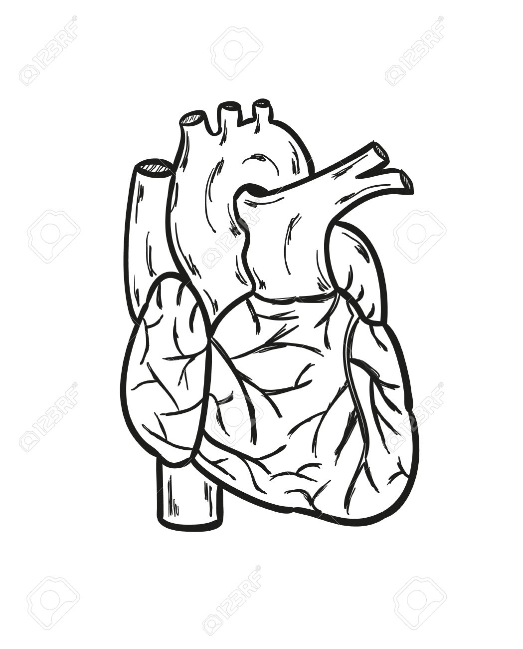 Human Heart Black And White With Lables Human Heart Clip Art.