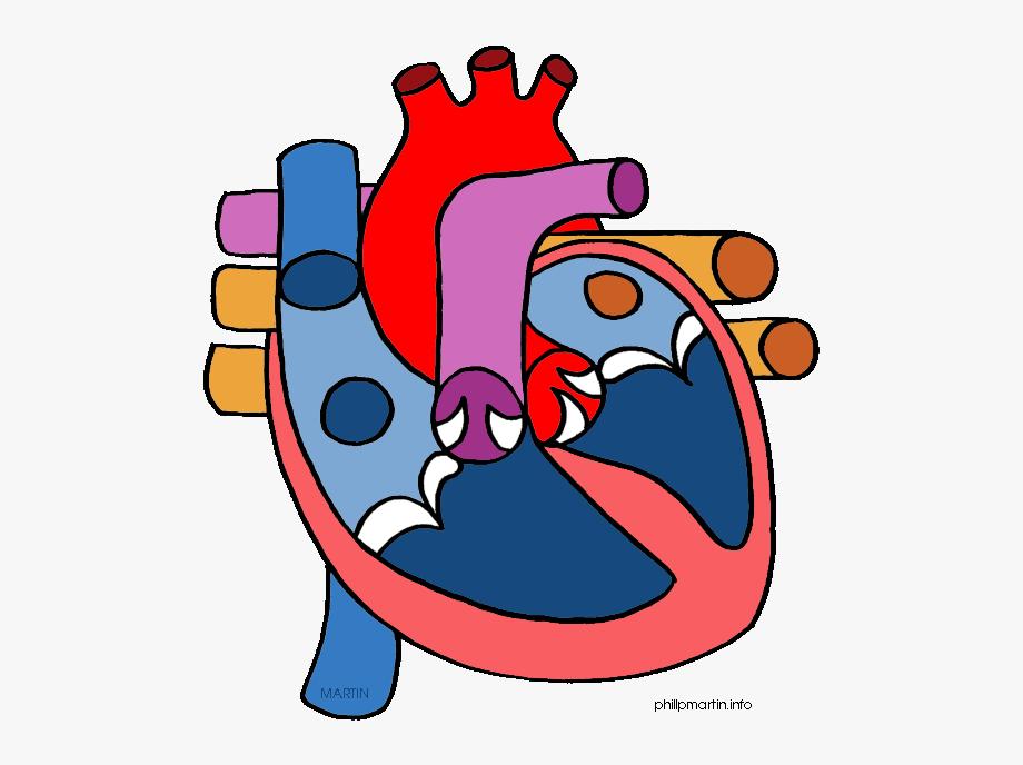 Human Heart Clipart.