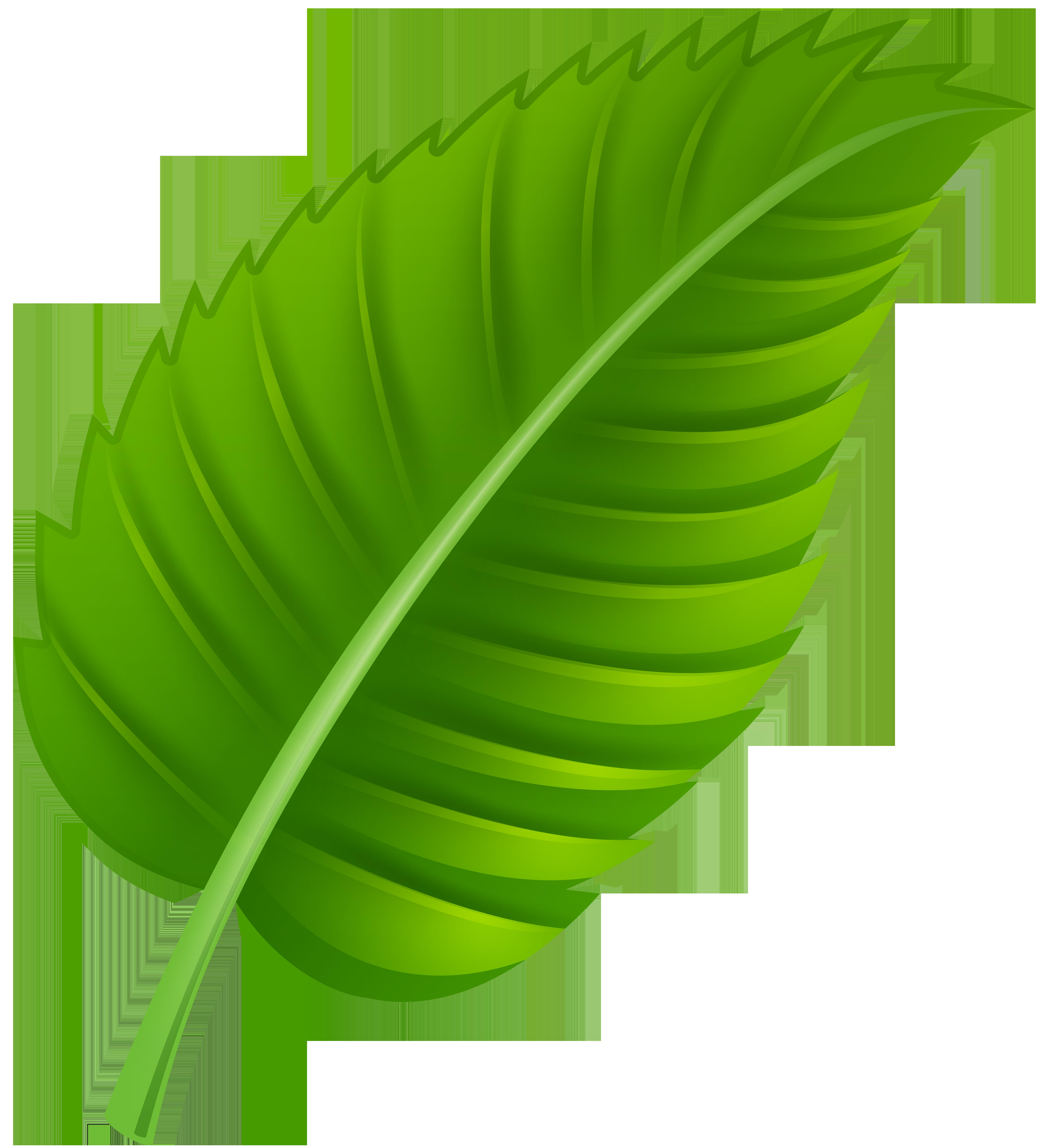 Green Leaf PNG Clip Art.