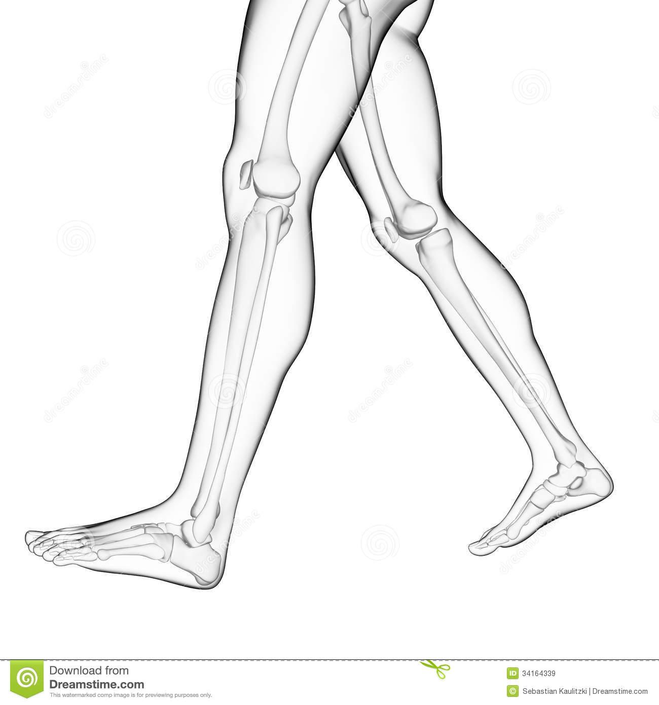 Leg Clip Art Black And White.