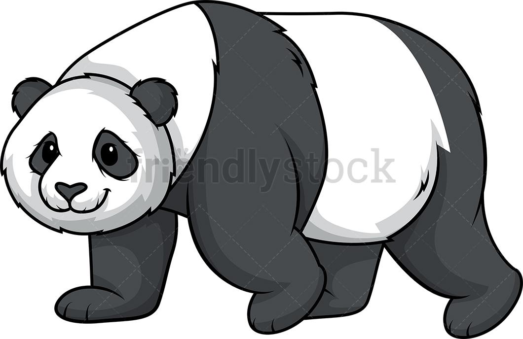 Panda Bear Walking Slowly.