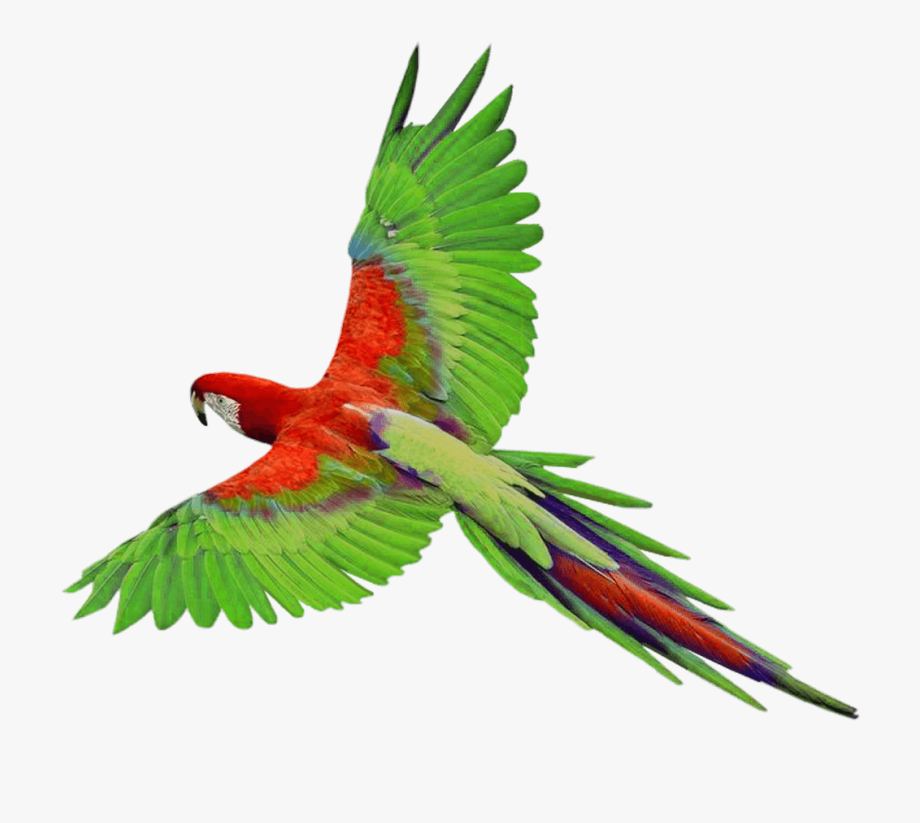 Flying Bird Clipart.
