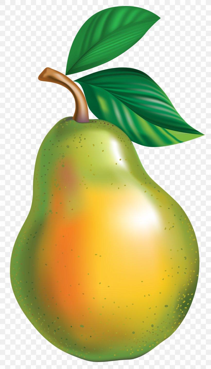 Pyrus × Bretschneideri Asian Pear Clip Art, PNG, 2367x4144px.