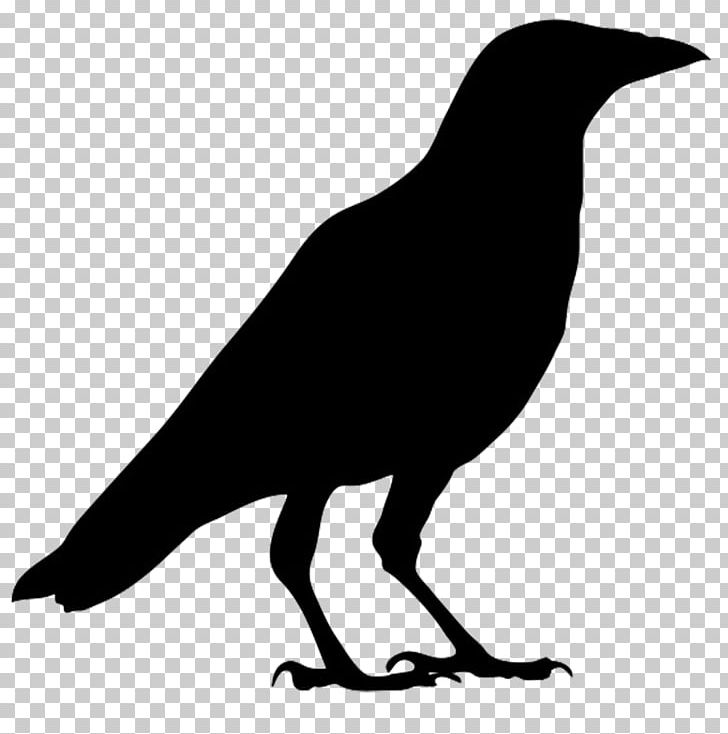 American Crow Common Raven Bird Carrion Crow PNG, Clipart, American.