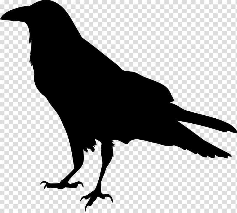 American crow Common raven Silhouette , vogelschwarz transparent.