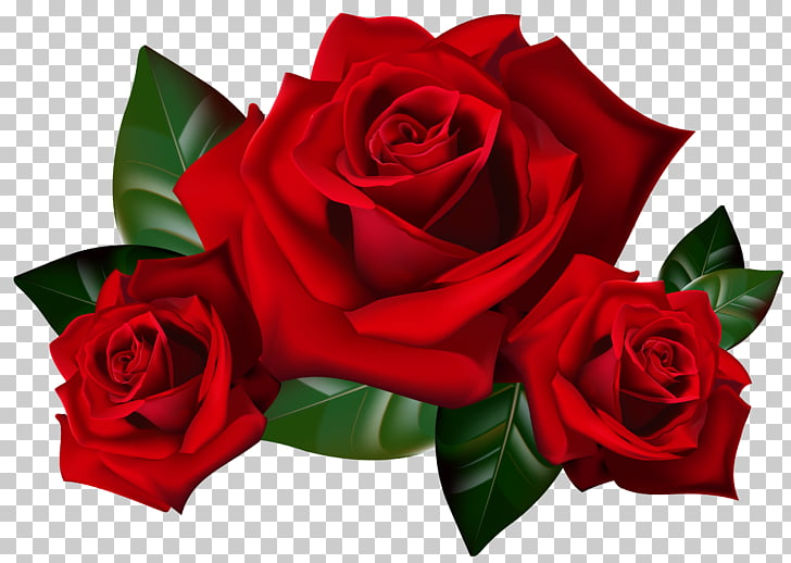 Rose , Red Roses , red roses 3D art PNG clipart.