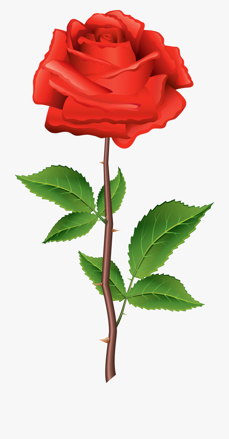 Rose Clipart Top.