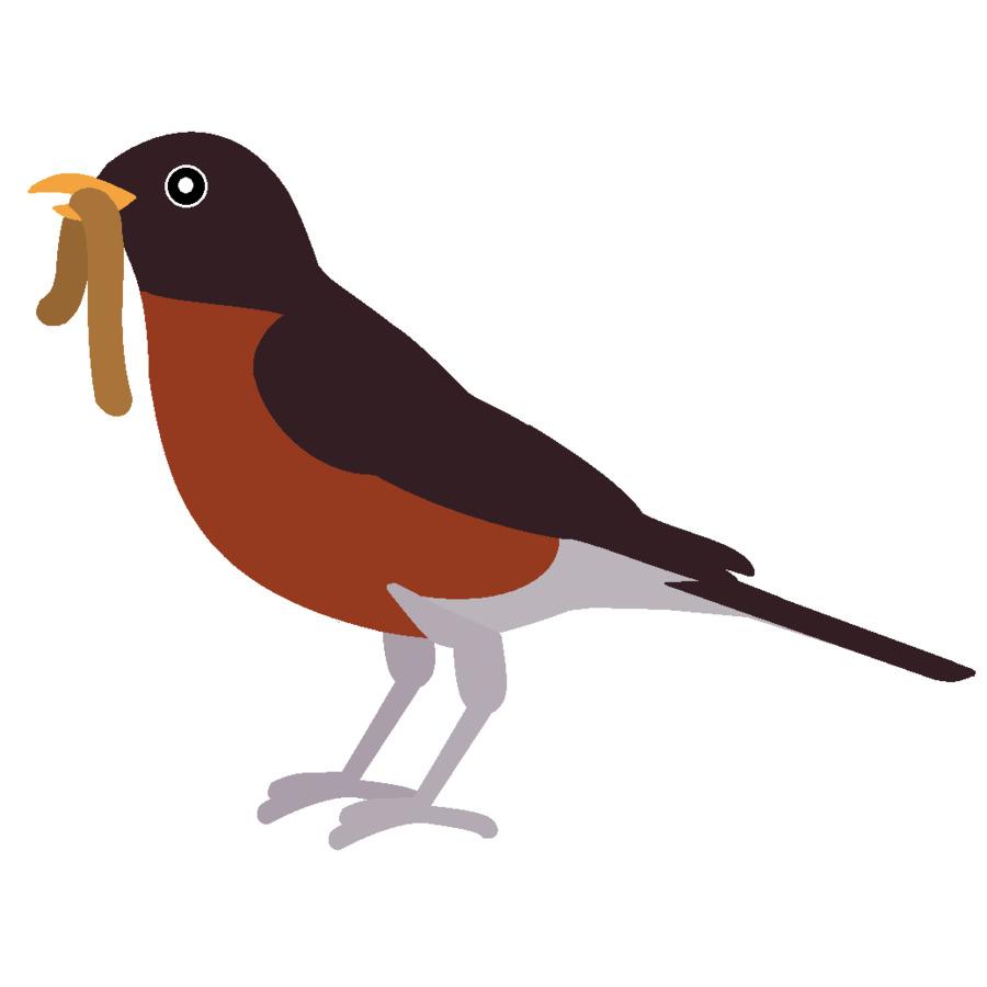 Robin Bird png download.
