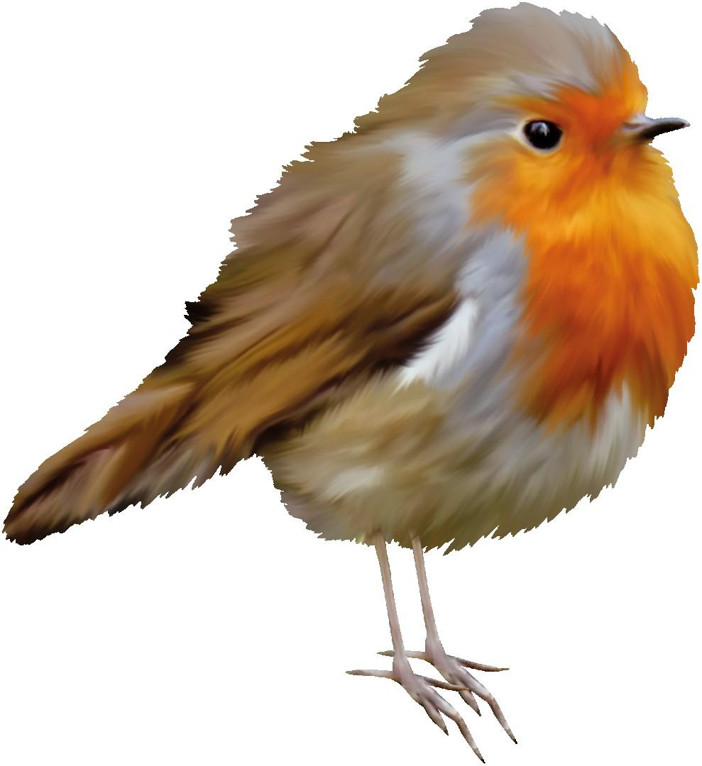 Clipart Robin Bird.