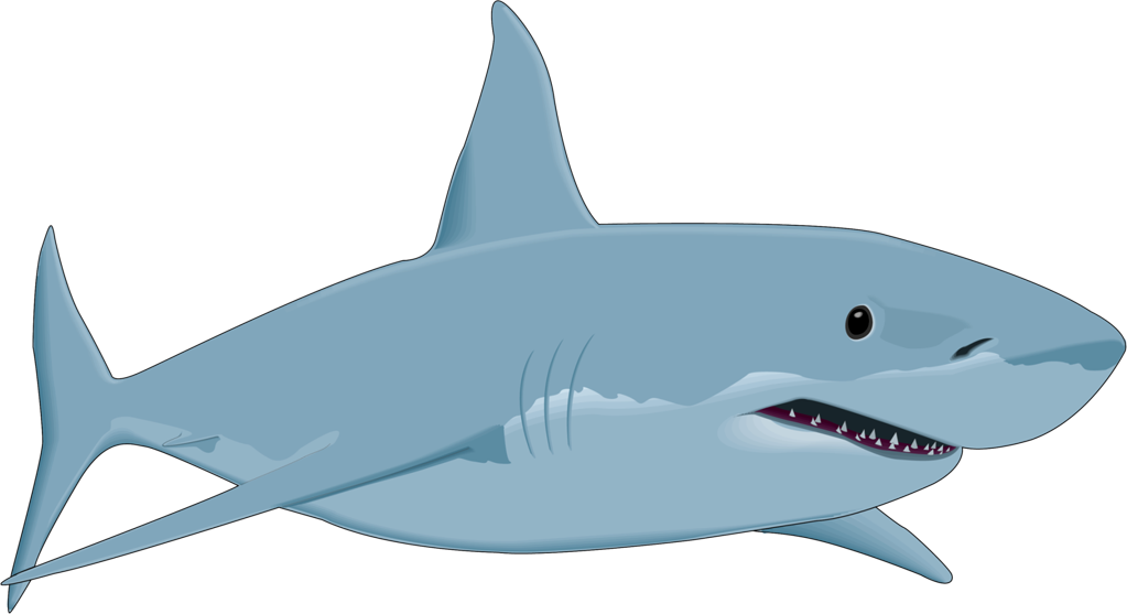 Great white shark Drawing Clip art.
