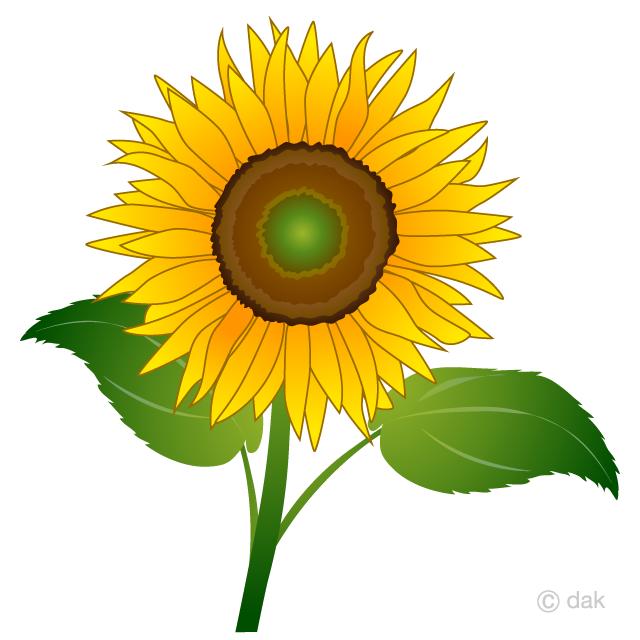 Free One Sunflower Clipart Image|Illustoon.