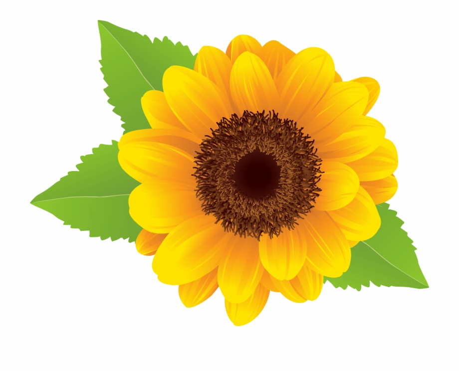 Free Sunflower Clipart Transparent Background, Download Free.
