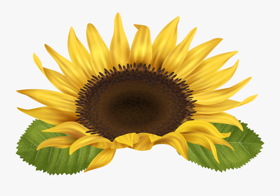 Png Clipart Sunflower Png , Free Transparent Clipart.