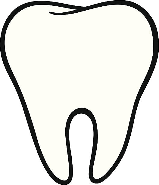 3529 Tooth free clipart.
