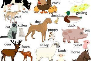 Clipart images of animals and their young ones 6 » Clipart Portal.