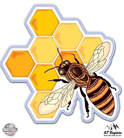 Honey Bee Honey Comb.