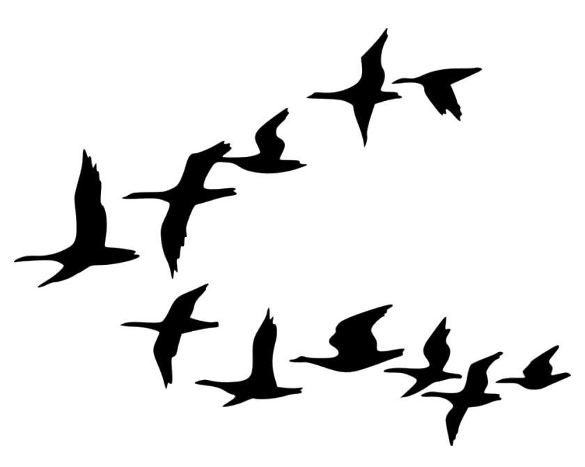 Bird Flock Of Birds Clipart Tree Cartoon Black And White Png.