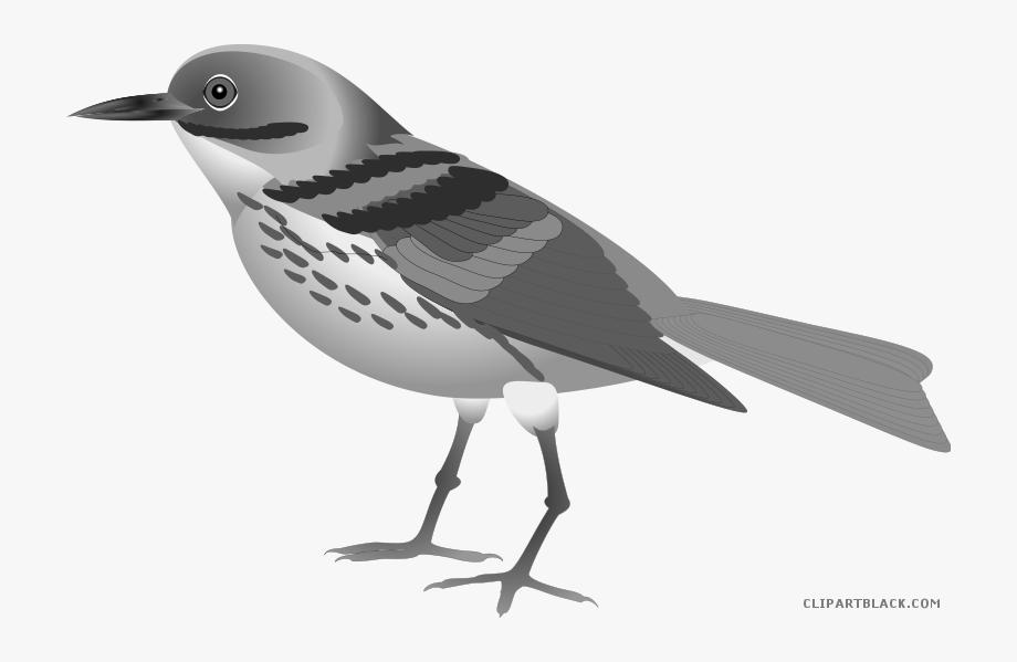 Nice Bird Animal Free Black White Clipart Images Clipartblack.
