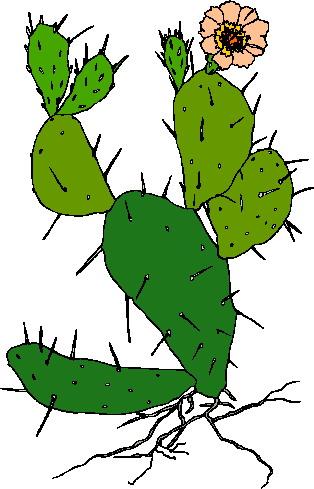 Cactus clip art of cactus wearing hats and guns image.
