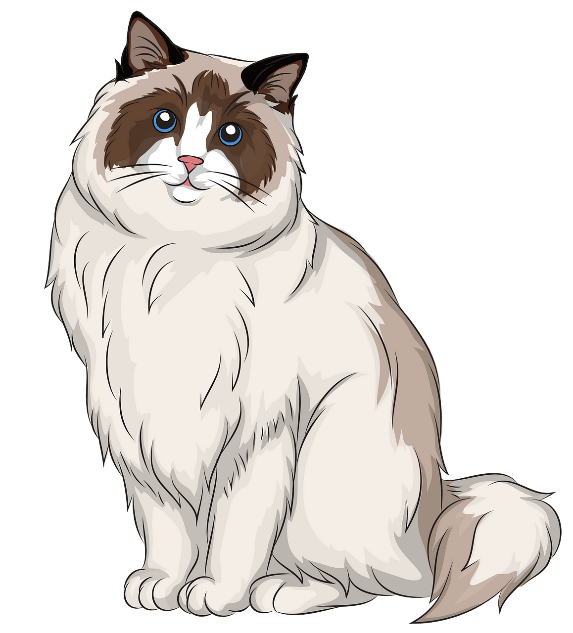 Ragdoll Cat clipart. Free download..