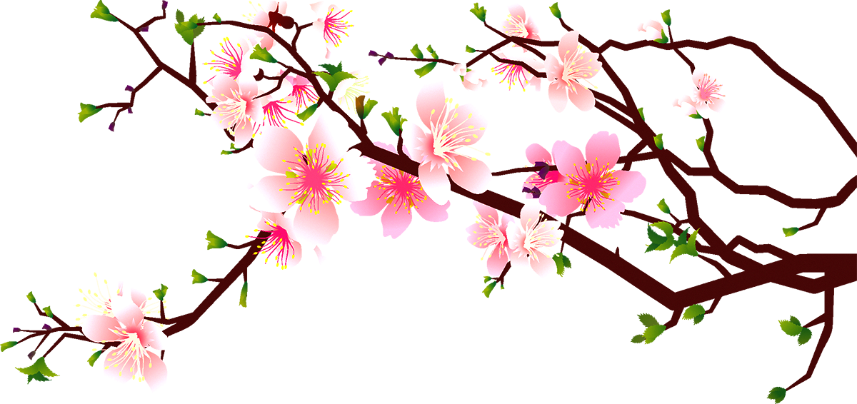 Cherry Blossom Clipart at GetDrawings.com.