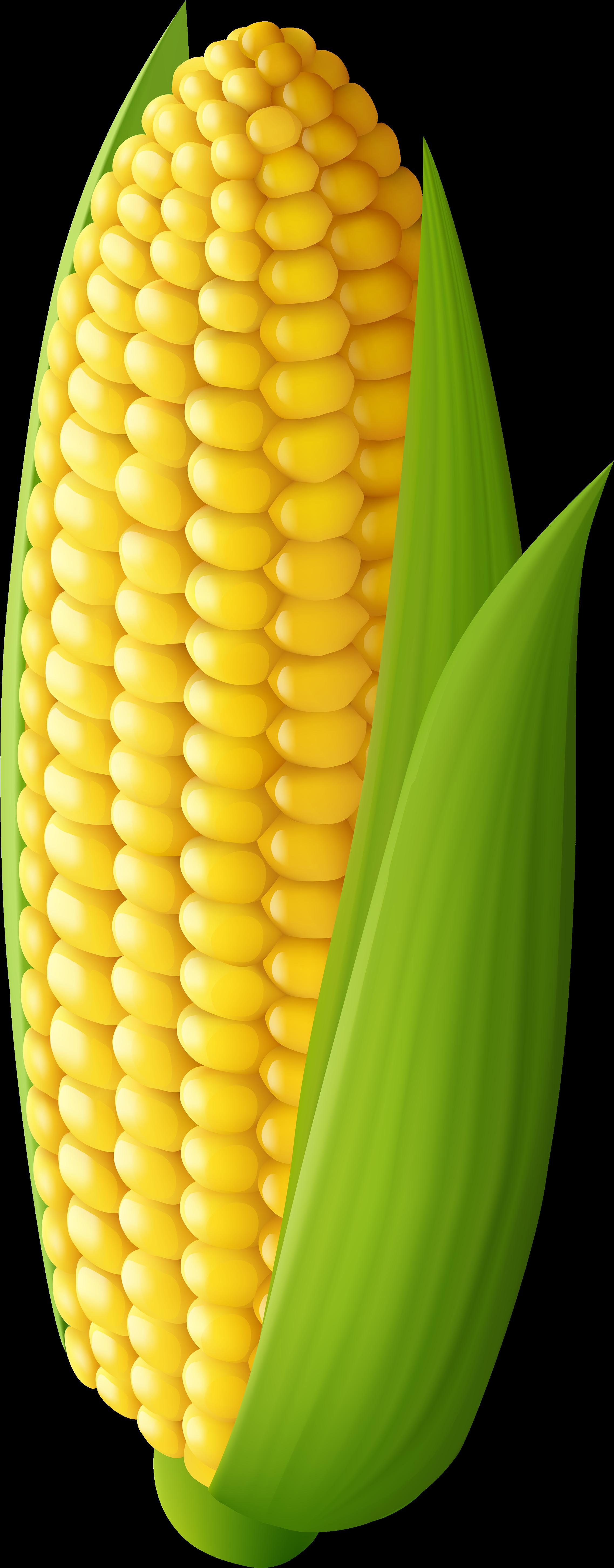 Free Corn Transparent, Download Free Clip Art, Free Clip Art.
