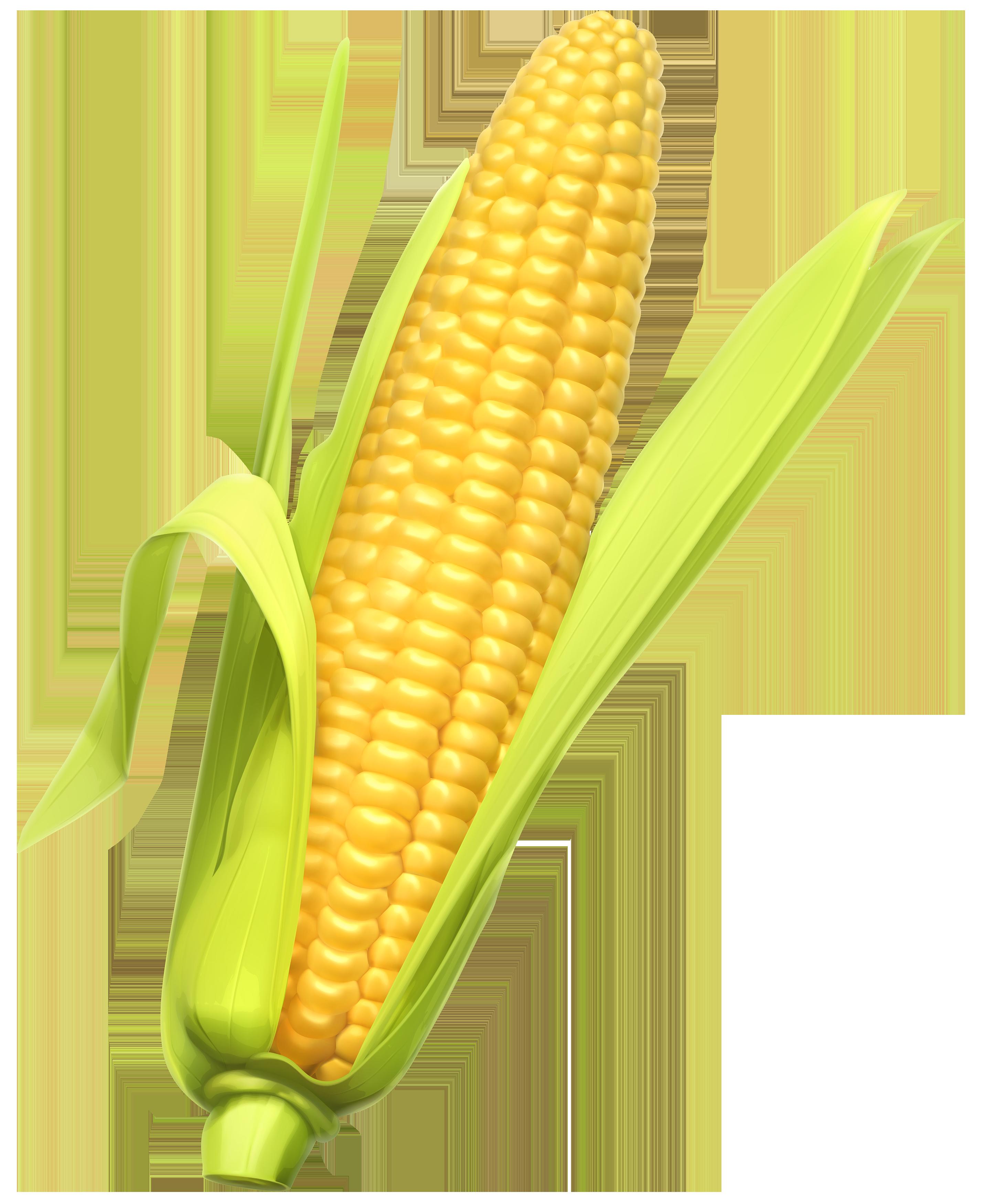 Corn PNG Clipart.