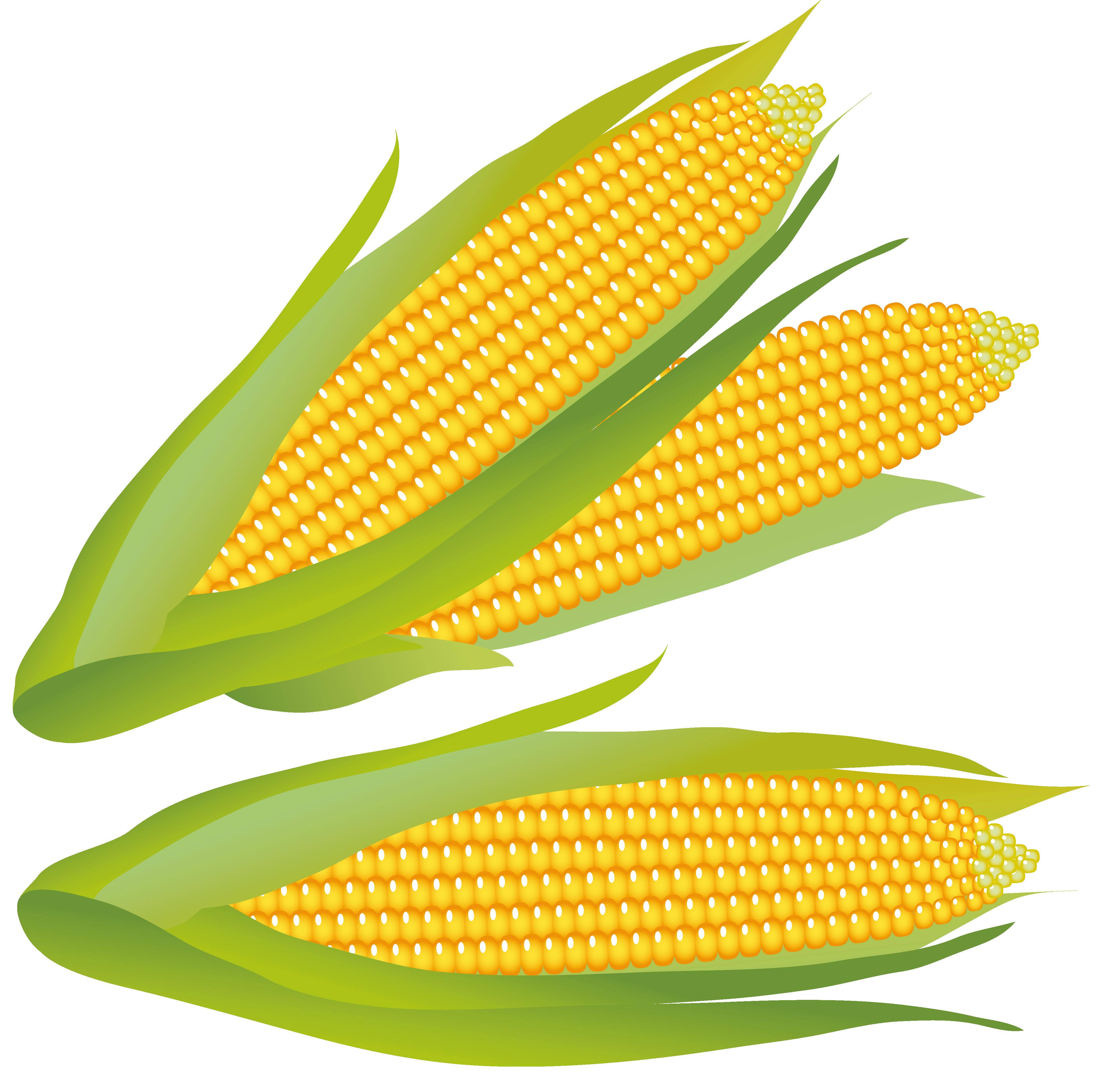 Free Corn Cliparts, Download Free Clip Art, Free Clip Art on.