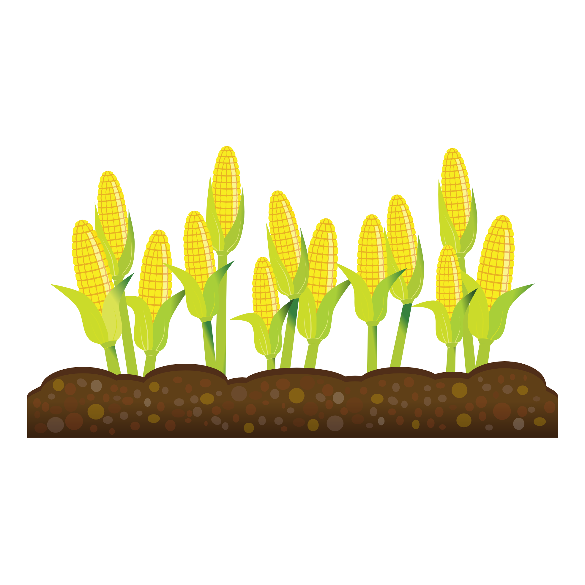 Crops Growing Corn clipart free image.