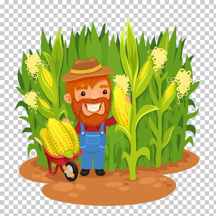 Maize Farmer Field corn , Corn cartoon of corn farmers in.