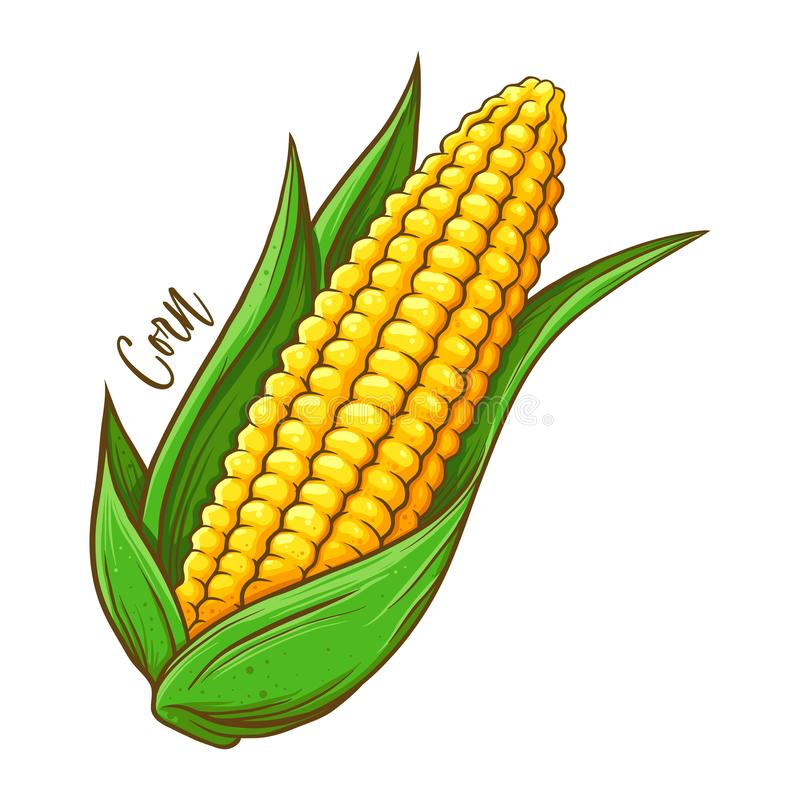 corn cob clip art 13 free Cliparts.