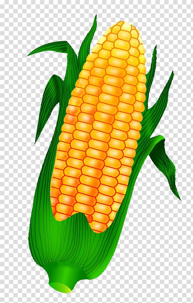Corn on the cob Maize Crop, Golden corn transparent.