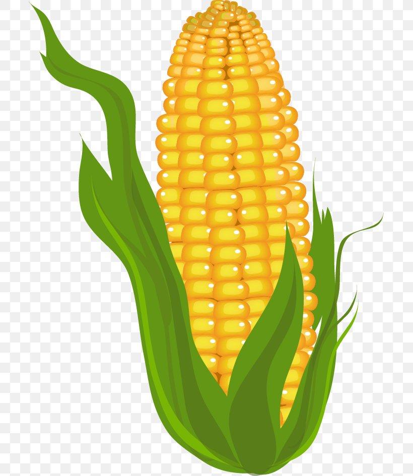 Candy Corn Corn On The Cob Maize Clip Art, PNG, 705x945px.